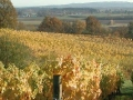 Stag Hollow Vineyards 2007