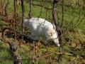 Casper in vines