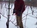 Pruning Feb 9