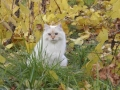 Casper in fall leaves